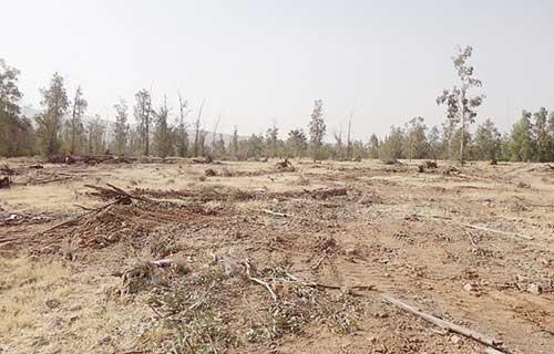 دستور بازپسگیری پارک جنگلی داراب از شهرداری صادر شد