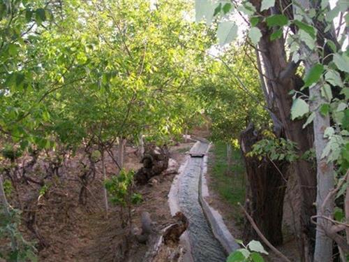 باغی برای تهران باقی نمانده است