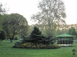 فایل اتوکد منطقه ۶ تهران (پارک لاله)